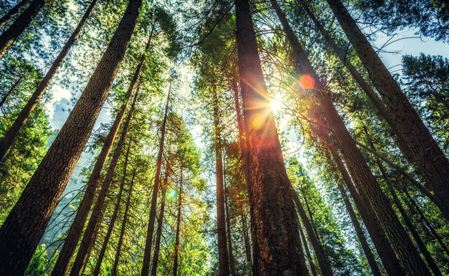 Tree-planting drones to speed up reforestation efforts